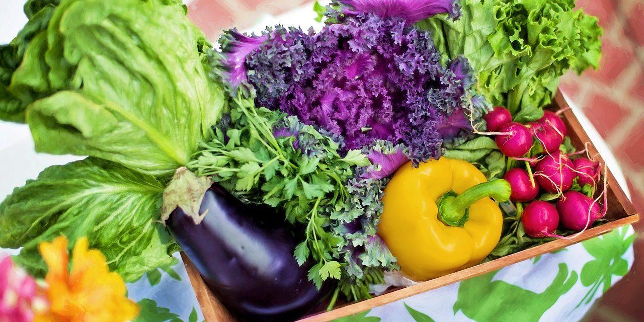 La Importancía E Impacto De Las Vitaminas Y Minerales En Tu Cuerpo…